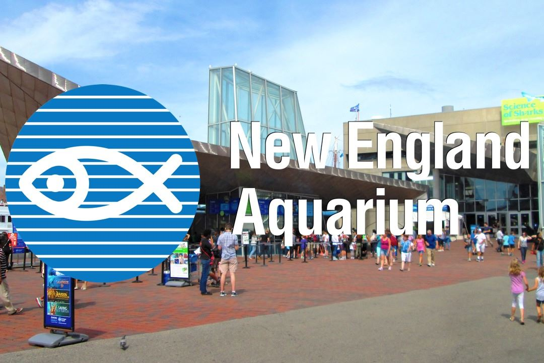 New_England_Aquarium Final